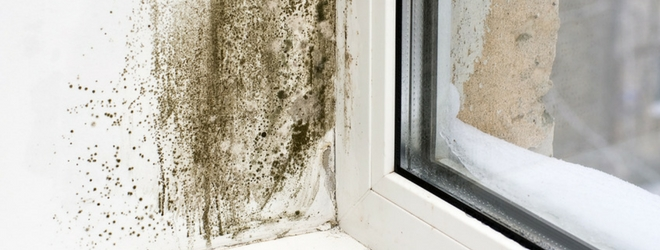 Indoor Air Quality Mold